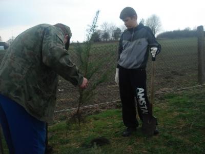 Sadzenie drzewek